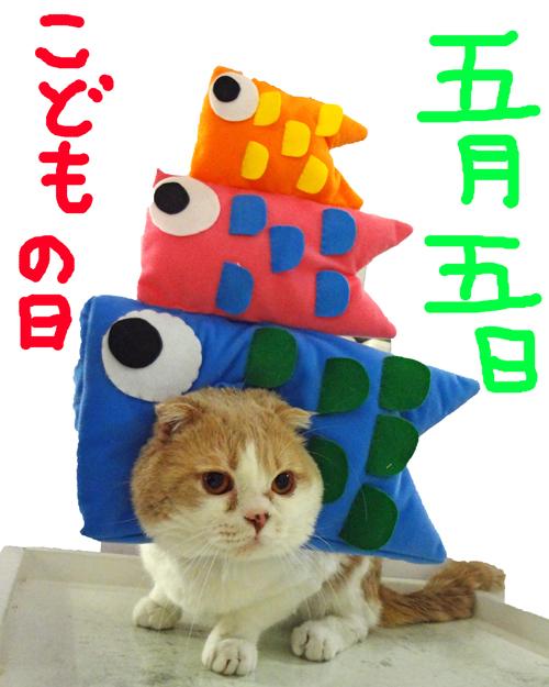 こいのぼりビッシュ1-1.jpg