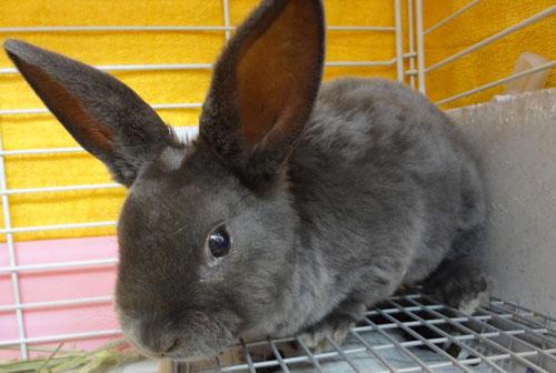 ウサギ ミニレッキスB 01.jpg