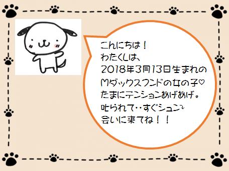 ティナ紹介.png
