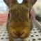 小動物 ミニウサギのご紹介
