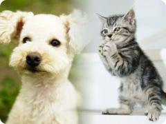 ペットショップマーチの子犬・子猫たち