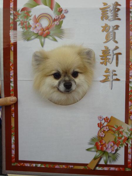 お知らせ111225-1.jpg